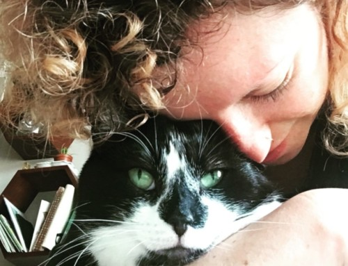 PET POLITICS: Kelly Knapp's Love of Noise (and Cats)